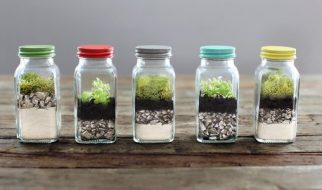 diy terrarium Singapore