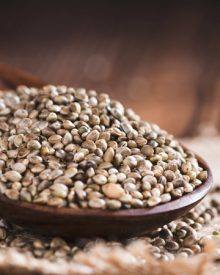 Is cannabis seed legal?